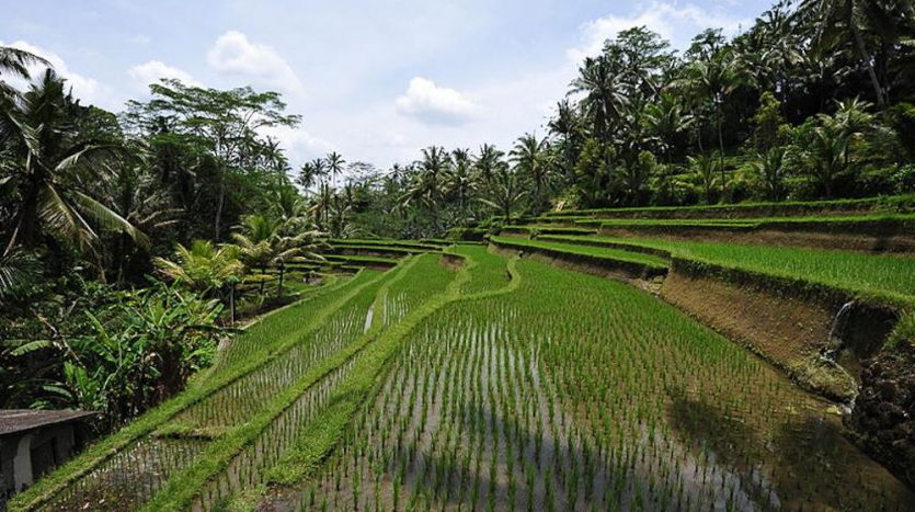 Optimum Bali - News - Gunung Kawi Temple
