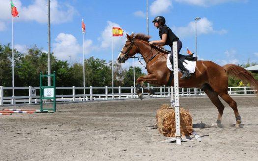 Optimum Bali - News - Horse Riding Experience