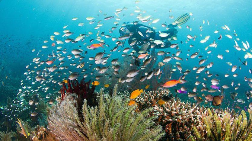 Optimum Bali - News - Snorkeling Experience in Bali